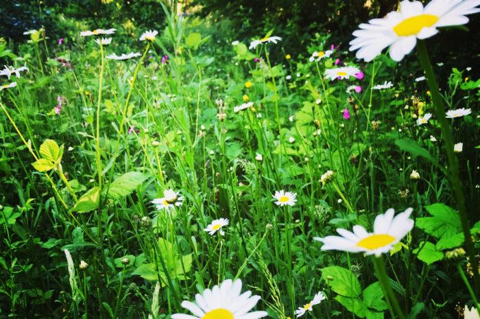 Eine Blumenwiese anlegen
